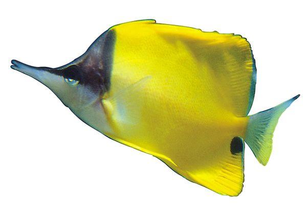 这回大神们给看看这鱼怎么养 北京观赏鱼 北京龙鱼第9张