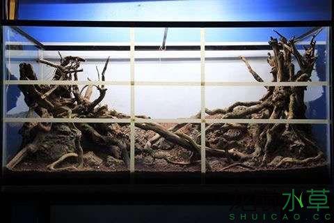 分享一个造景作品 北京观赏鱼 北京龙鱼第3张