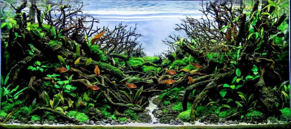 分享一个造景作品 北京观赏鱼 北京龙鱼第7张