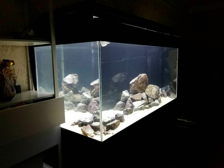 北京玫瑰银板鱼批发那就这样吧 北京观赏鱼 北京龙鱼第2张