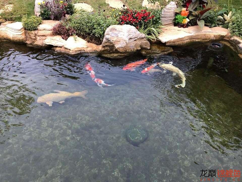 这个院子靓了 北京龙鱼论坛 北京龙鱼第2张