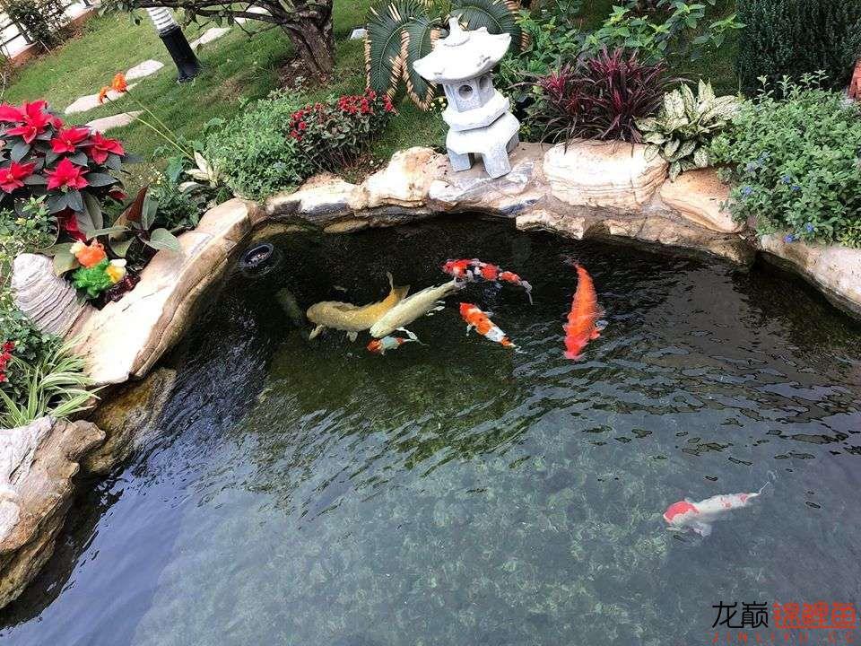这个院子靓了 北京龙鱼论坛 北京龙鱼第3张