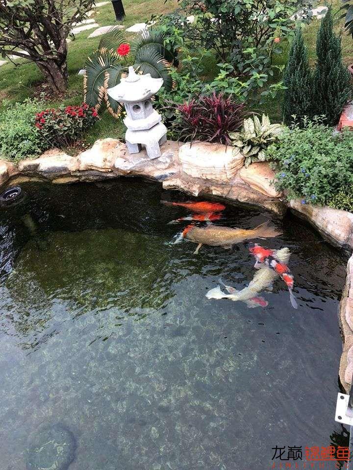 这个院子靓了 北京龙鱼论坛 北京龙鱼第4张