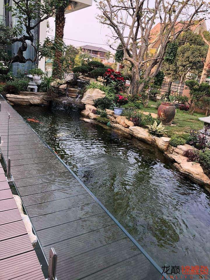 这个院子靓了 北京龙鱼论坛 北京龙鱼第6张