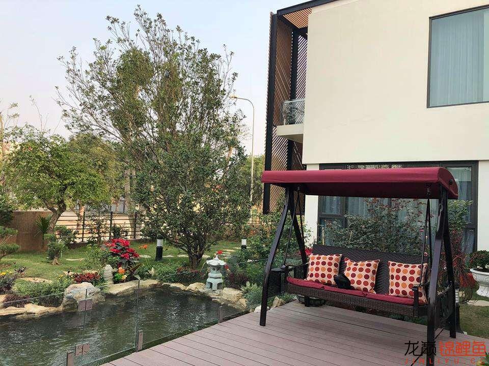 这个院子靓了 北京龙鱼论坛 北京龙鱼第9张