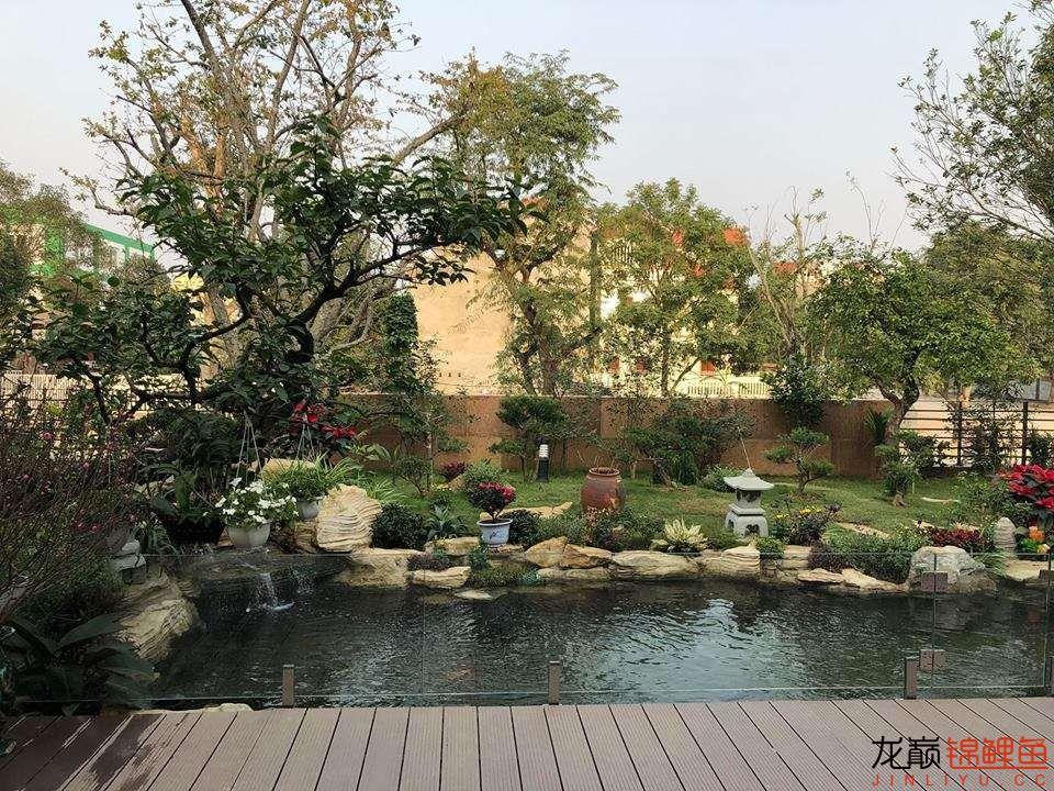 这个院子靓了 北京龙鱼论坛 北京龙鱼第11张