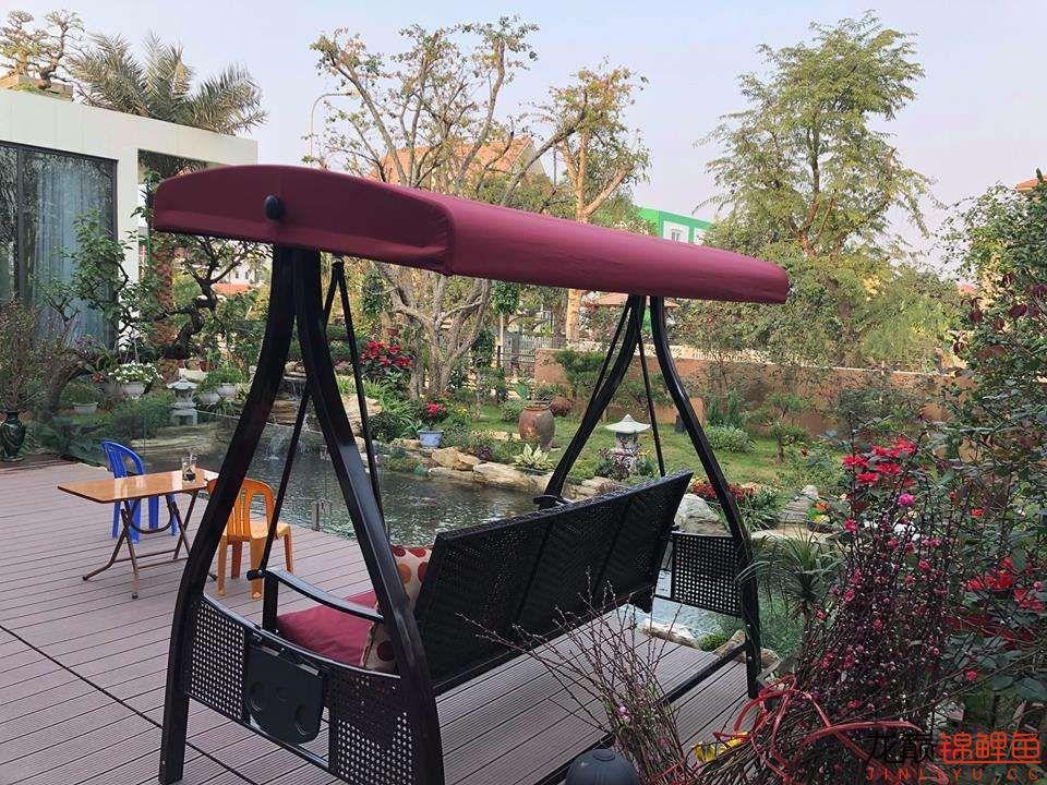 这个院子靓了 北京龙鱼论坛 北京龙鱼第13张