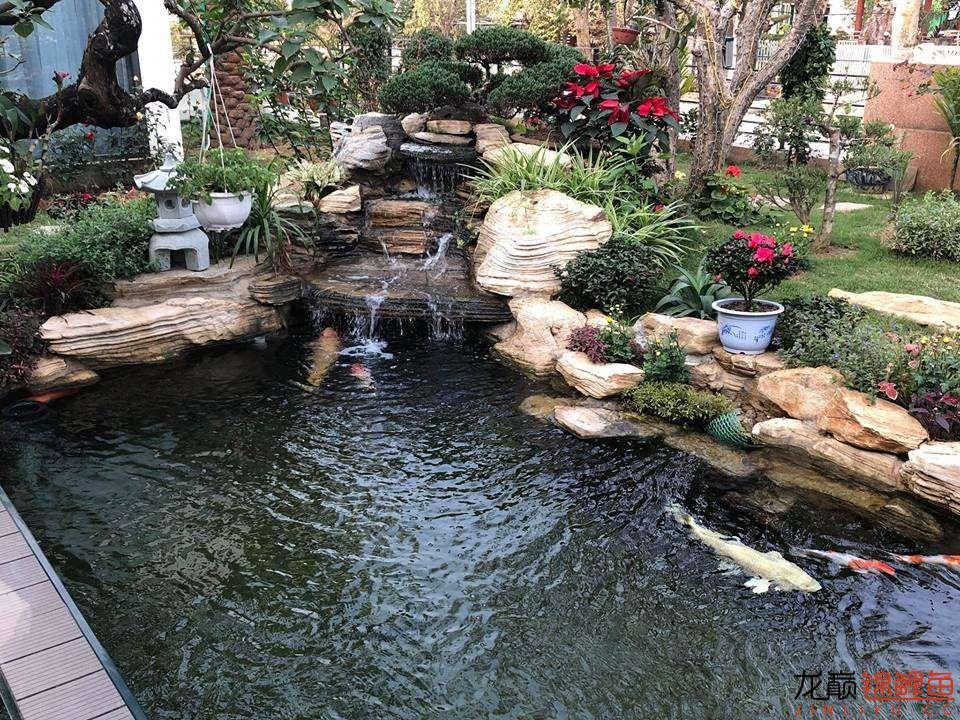 这个院子靓了 北京龙鱼论坛 北京龙鱼第14张