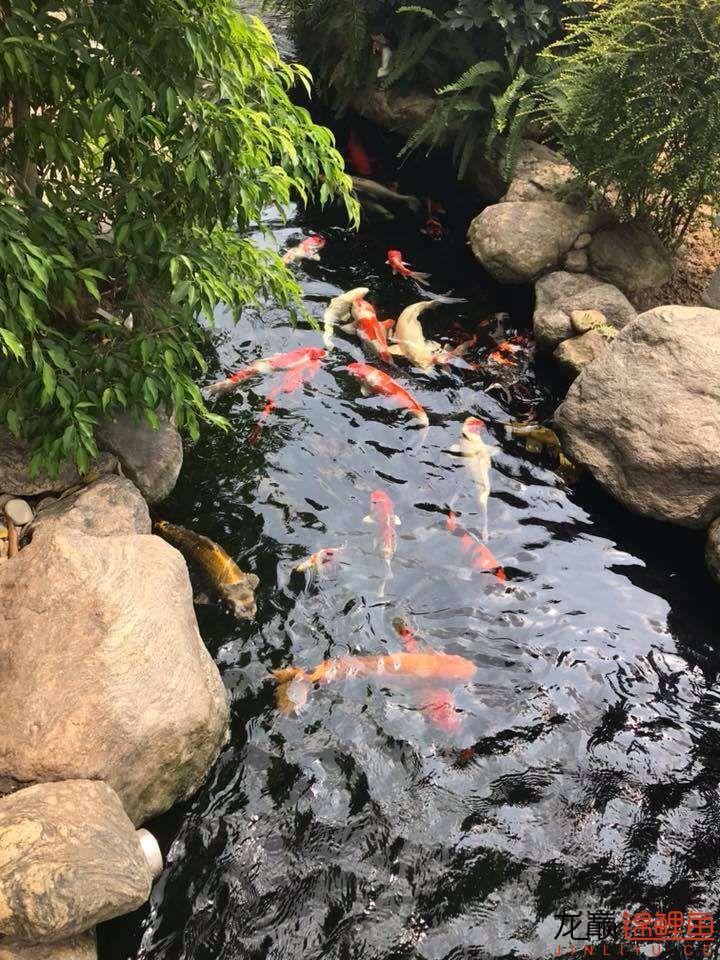 这个院子靓了 北京龙鱼论坛 北京龙鱼第15张
