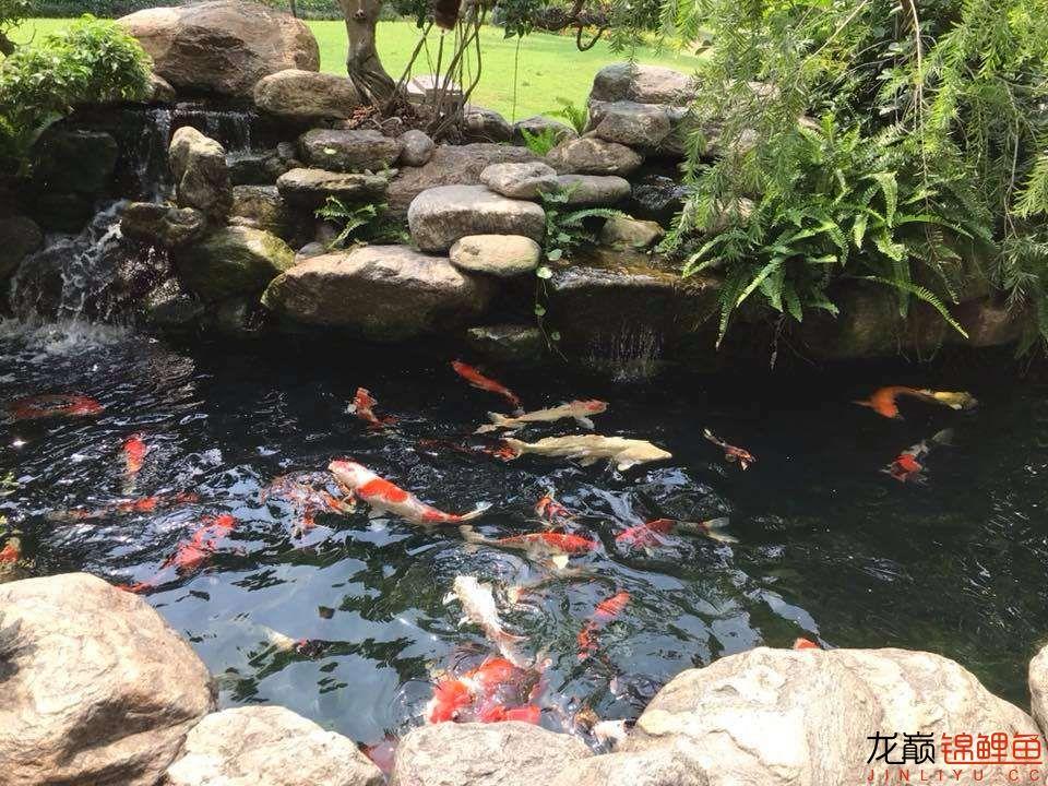 这个院子靓了 北京龙鱼论坛 北京龙鱼第16张