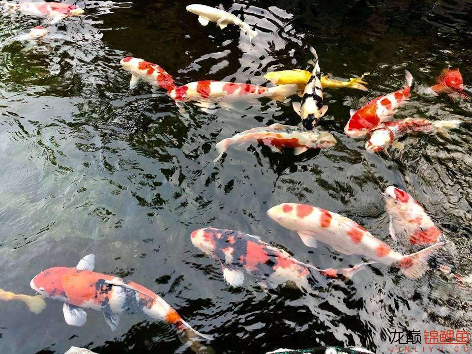 这个院子靓了 北京龙鱼论坛 北京龙鱼第17张