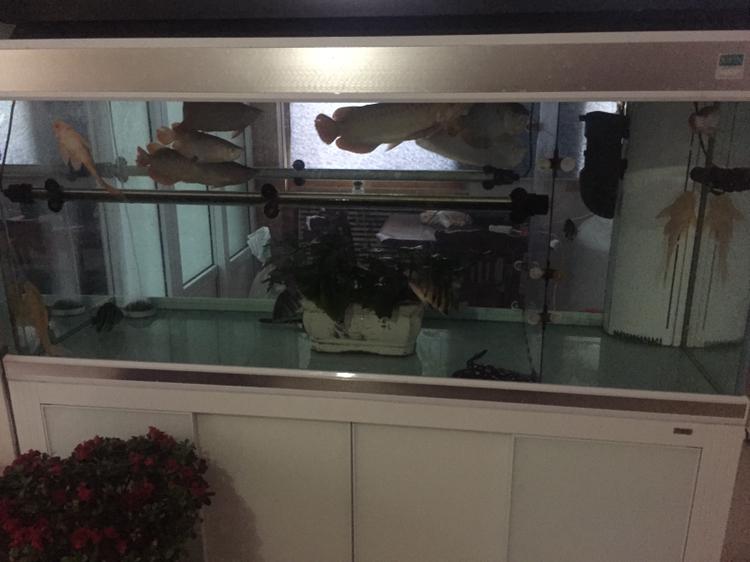 北京水族鱼缸专卖店早安~~~~ 北京龙鱼论坛 北京龙鱼第1张