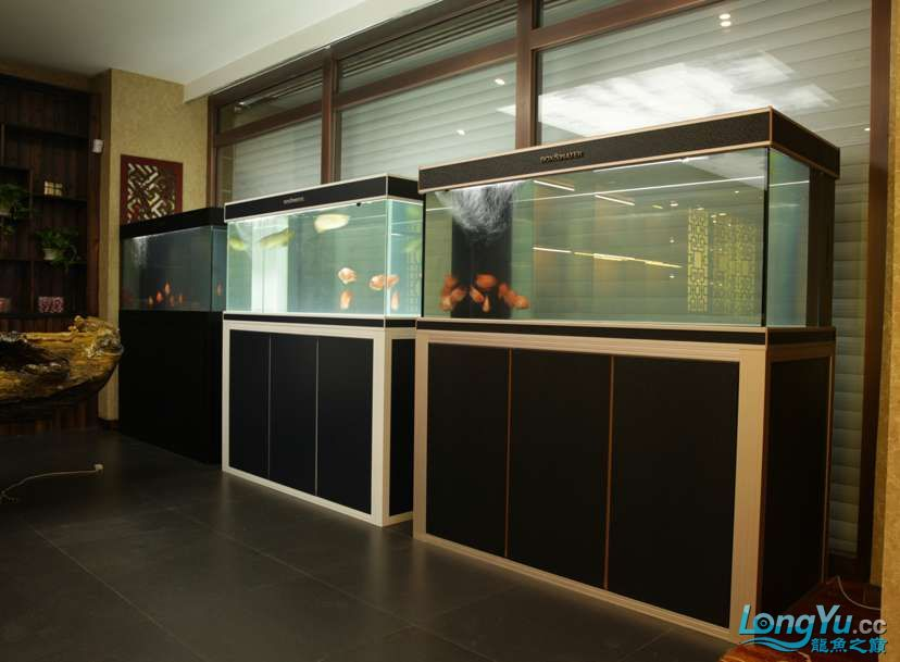 辽宁鱼友圈线下聚会活动如约而至邀您参与 北京龙鱼论坛 北京龙鱼第7张