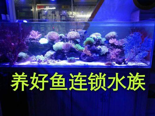 大家帮我看看我买到的是什么品种的龙鱼 北京龙鱼论坛 北京龙鱼第3张