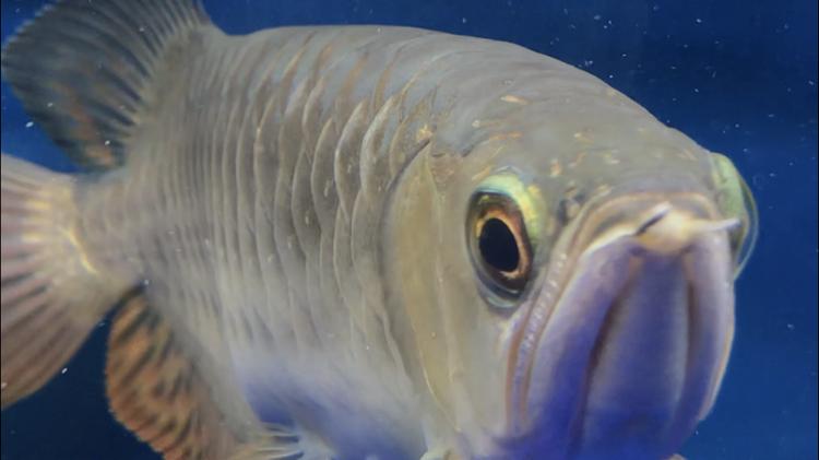 北京观赏鱼之家已经越来越多症状了 北京观赏鱼 北京龙鱼第5张