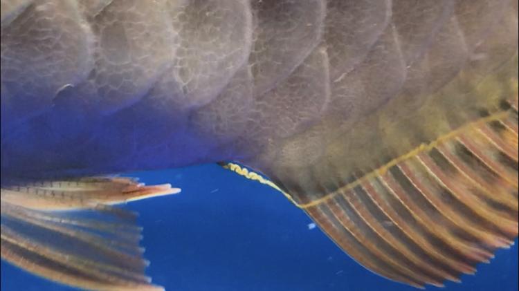 北京观赏鱼之家已经越来越多症状了 北京观赏鱼 北京龙鱼第6张