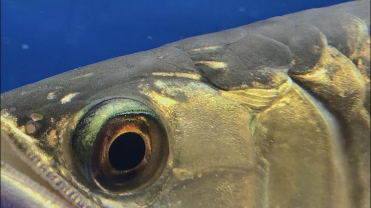 北京观赏鱼之家已经越来越多症状了 北京观赏鱼 北京龙鱼第4张