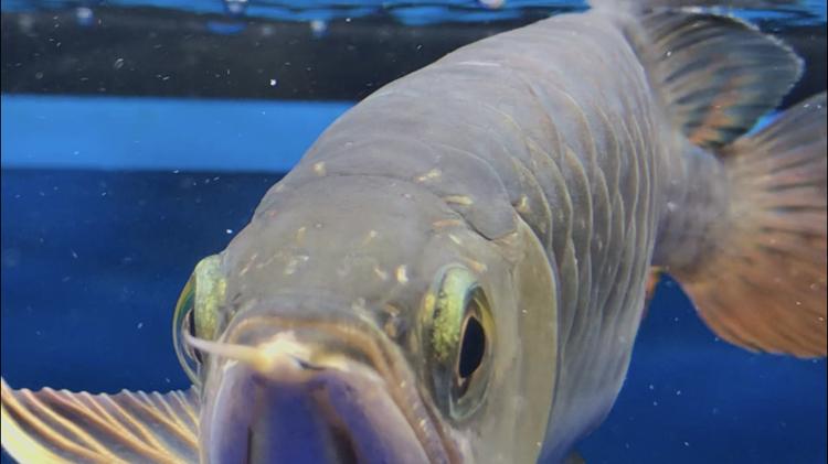 北京观赏鱼之家已经越来越多症状了 北京观赏鱼 北京龙鱼第7张