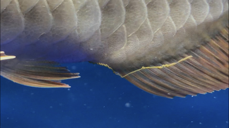 北京观赏鱼之家已经越来越多症状了 北京观赏鱼 北京龙鱼第8张