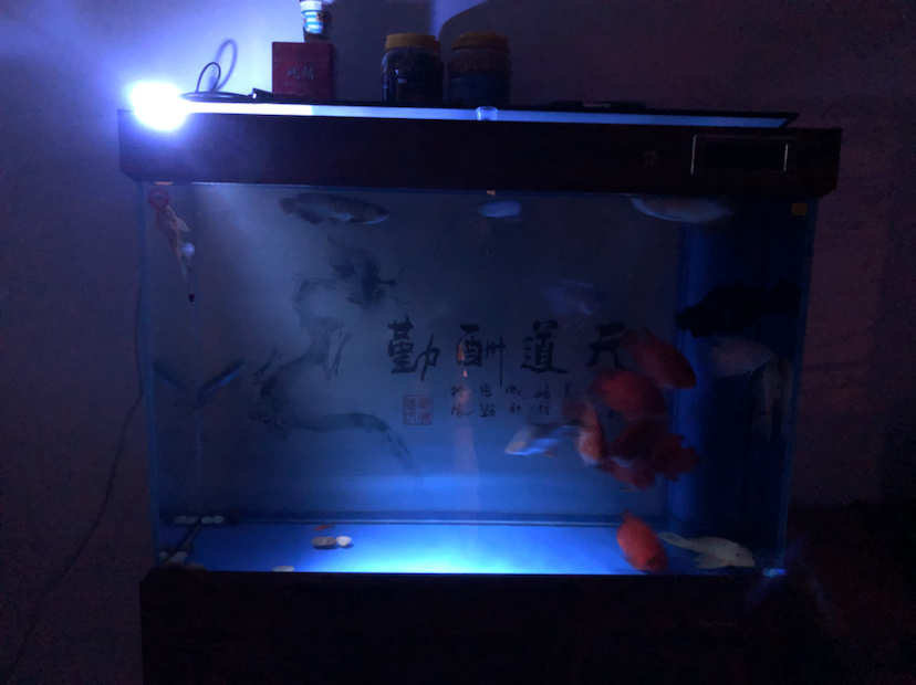 北京哪个水族店有鱼缸各位帮忙看一下