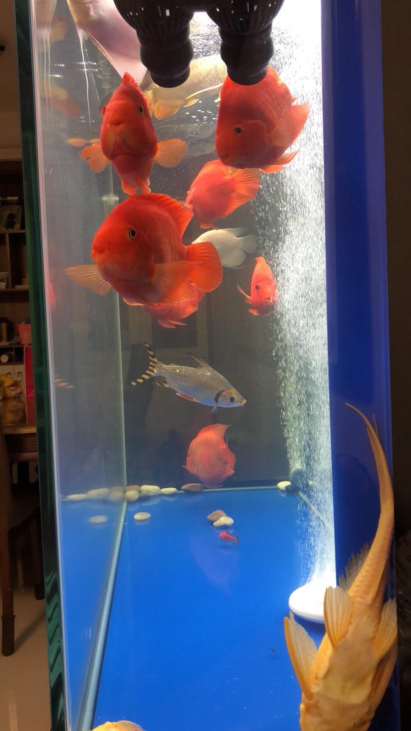 北京哪个水族店有鱼缸各位帮忙看一下 北京龙鱼论坛 北京龙鱼第3张