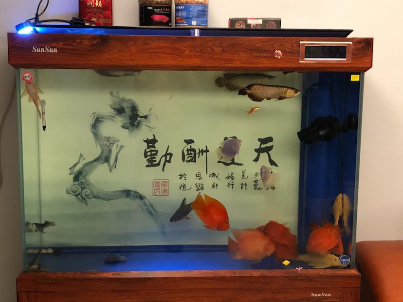北京哪个水族店有鱼缸各位帮忙看一下 北京龙鱼论坛 北京龙鱼第2张