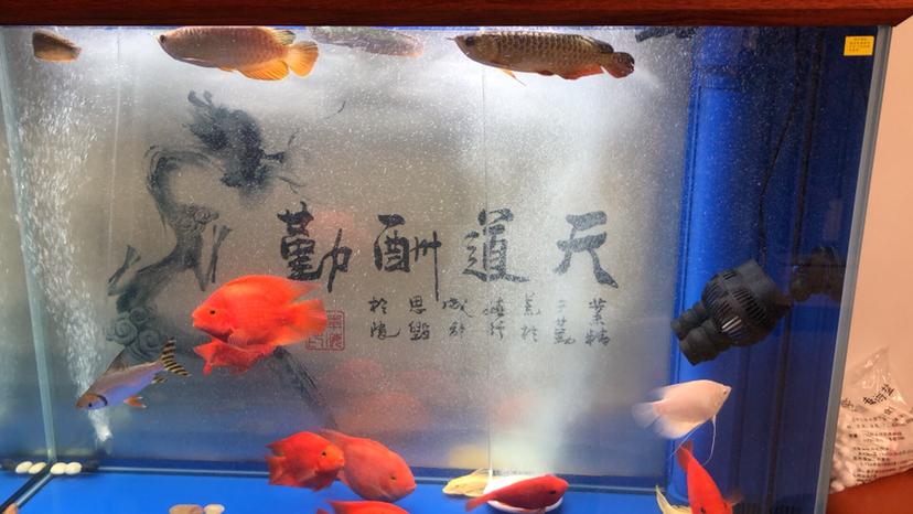 北京哪个水族店有鱼缸各位帮忙看一下 北京龙鱼论坛 北京龙鱼第4张