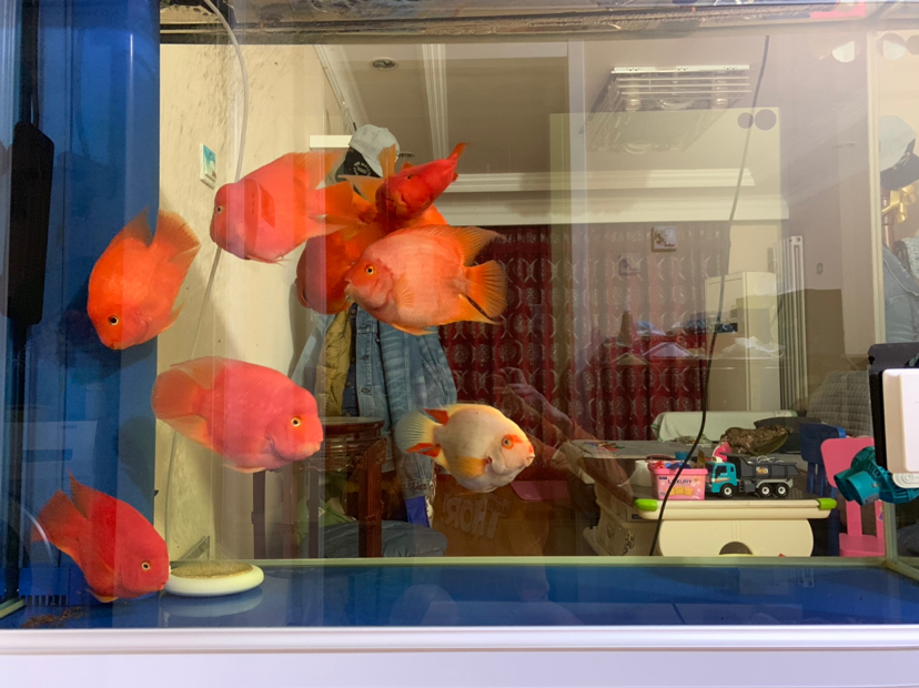 就是牛壁 北京观赏鱼 北京龙鱼第1张