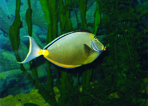 鱼为什么总喜欢在水面游 北京观赏鱼 北京龙鱼第2张
