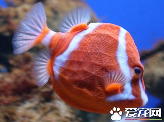玩转HUAWEI 北京观赏鱼 北京龙鱼第2张