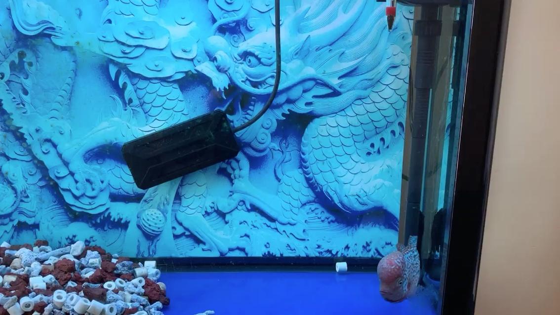 头又大了一点 北京龙鱼论坛 北京龙鱼第1张