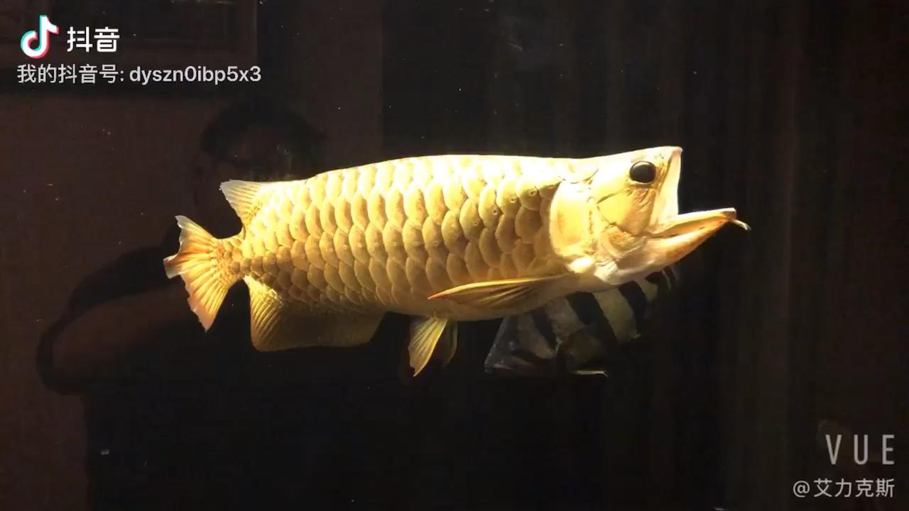 北京二手鱼缸水族箱一眼瞬間 北京观赏鱼