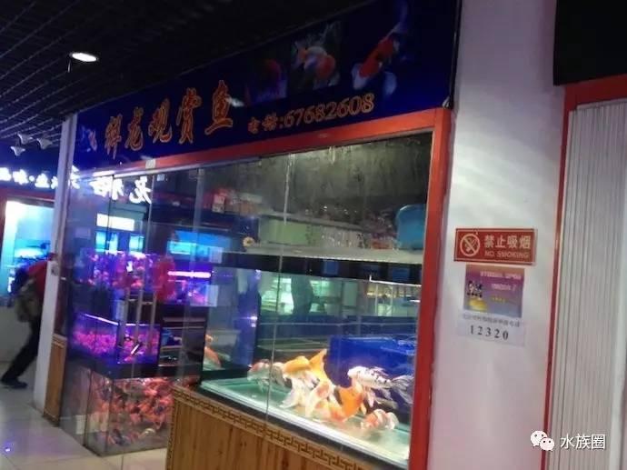 高锰酸钾可以治疗鱼病 北京龙鱼论坛 北京龙鱼第2张