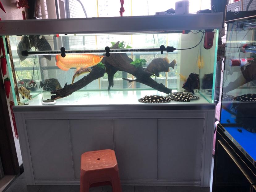 北京南交哪里有水族馆鱼缸新成员 北京观赏鱼 北京龙鱼第1张