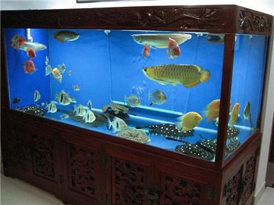 北京红运大饭店养了3个多月 北京龙鱼论坛 北京龙鱼第2张