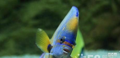 就喜欢龙鱼吃东西 北京观赏鱼 北京龙鱼第2张