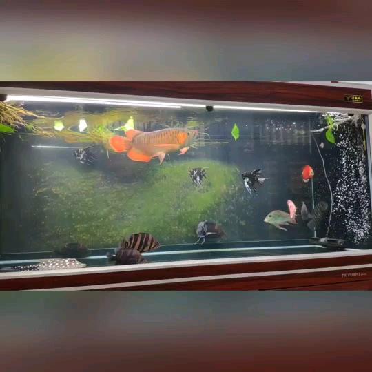 北京花鸟鱼虫市场周边魟鱼起飞 北京龙鱼论坛 北京龙鱼第1张