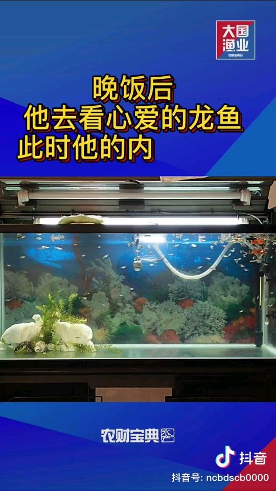 北京珍珠魟鱼这位鱼友您还好吗?