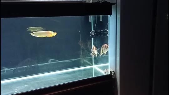 新鱼取缸 北京观赏鱼