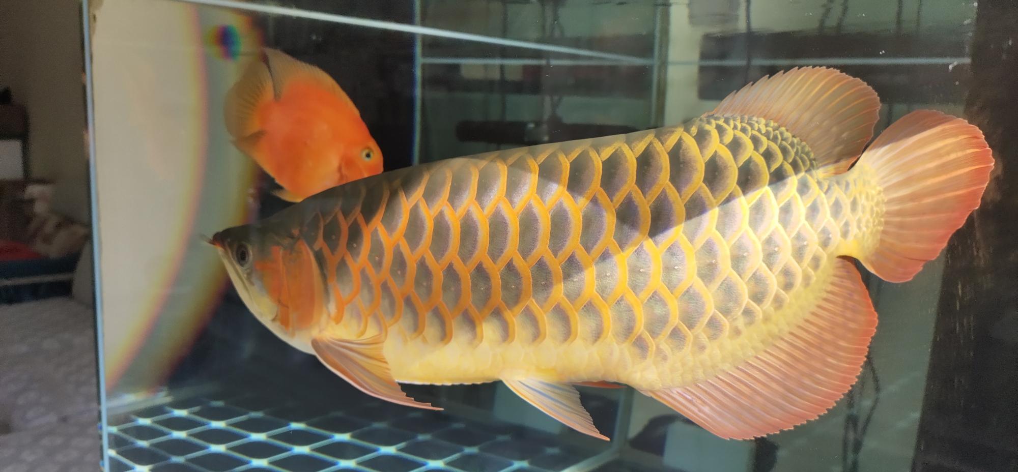 交流 北京观赏鱼
