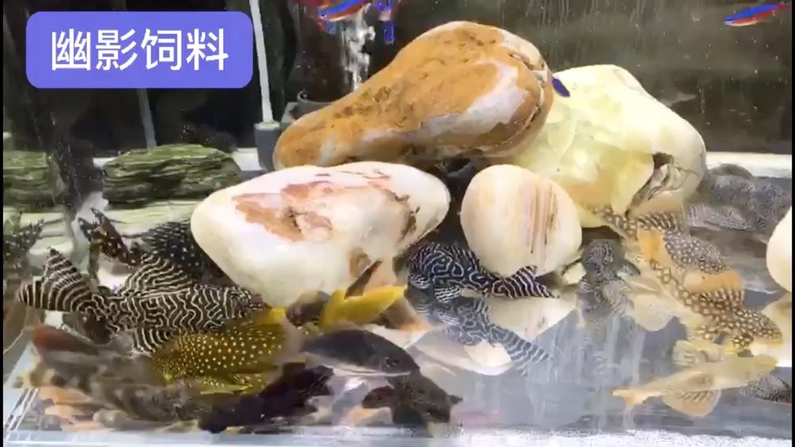 异形缸 北京观赏鱼 北京龙鱼第1张