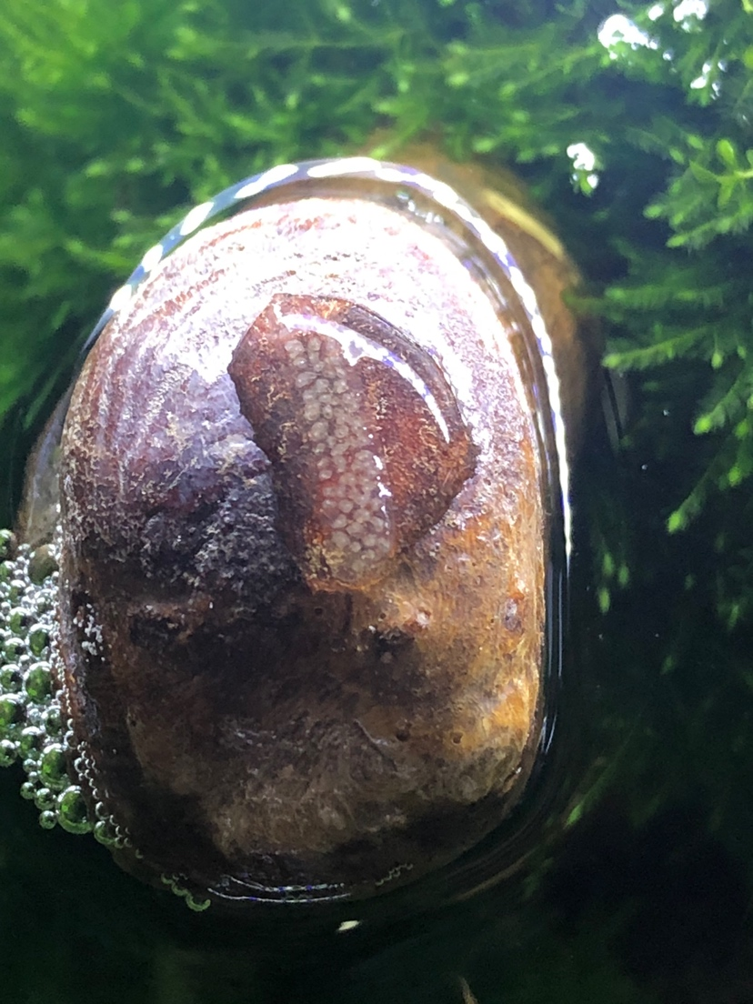 是虫卵吗 北京龙鱼论坛 北京龙鱼第1张