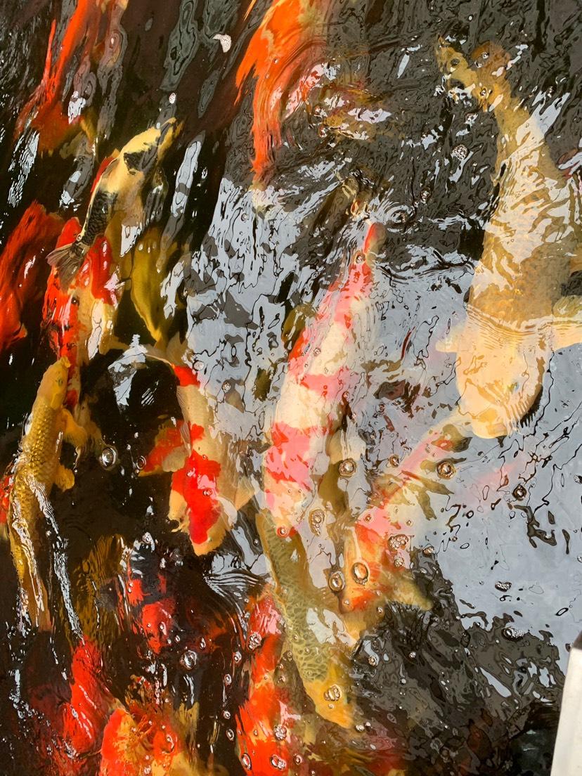 北京财神鹦鹉-红财神价格异议 北京龙鱼论坛 北京龙鱼第4张