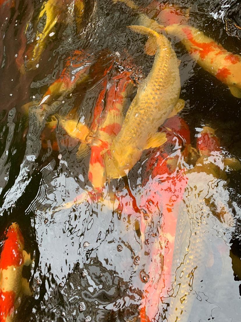 北京财神鹦鹉-红财神价格异议 北京龙鱼论坛 北京龙鱼第6张