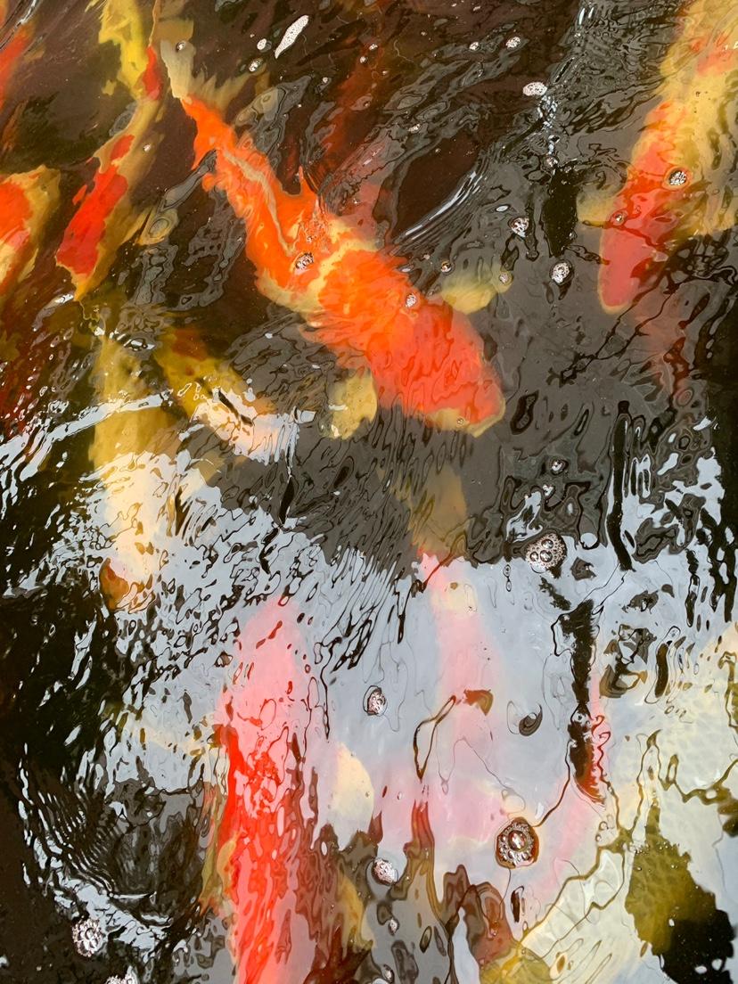 北京财神鹦鹉-红财神价格异议 北京龙鱼论坛 北京龙鱼第7张