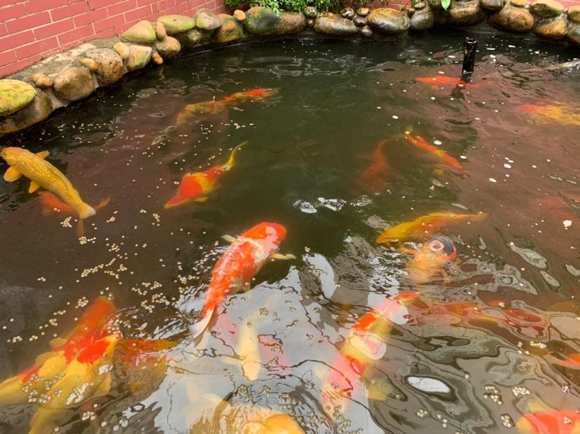 北京财神鹦鹉-红财神价格异议 北京龙鱼论坛 北京龙鱼第8张