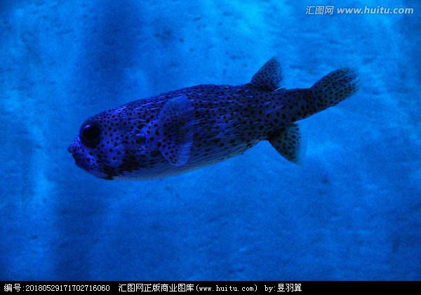 北京热带鱼打卡喂食 北京龙鱼论坛 北京龙鱼第2张