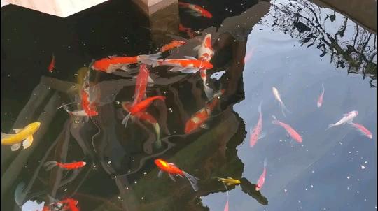 北京热带鱼打卡喂食