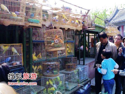 来段看得清楚些 北京观赏鱼 北京龙鱼第2张