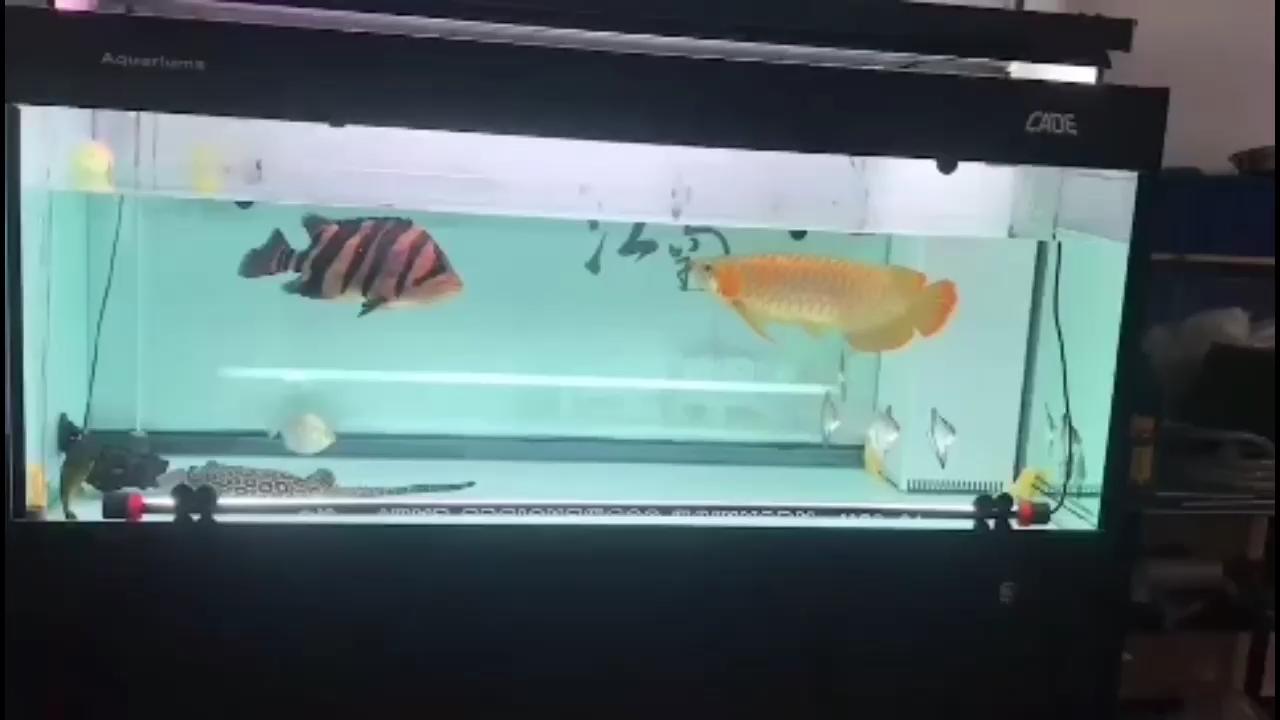 北京森森水族箱鱼缸价格红不红自己看